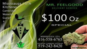 29939811 25860468 Free Gram weedmaps Mississauga kitchener cambridge waterloo ontario marijuana cannabis weed marijuana dispensary special delivery service