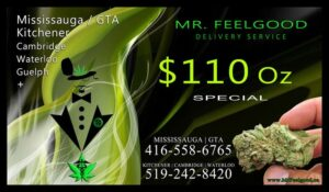 54224159  110  weedmaps Mississauga GTA Toronto  kitchener cambridge waterloo ontario marijuana cannabis weed marijuana dispensary special delivery service