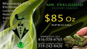72239731  85 oz special cheap weedmaps Mississauga kitchener cambridge waterloo ontario marijuana cannabis weed marijuana dispensary special delivery service