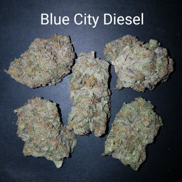 81480929 Blue City diesel AAAAA Quad strain Weed Bud Dispensary weedmaps Canna West CannaWest Toronto GTA Greater Area Etobicoke North East York Downtown cannabis special delivery