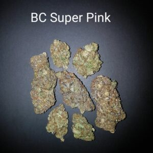 87237453 Bc Super pink AAAA Quad strain Weed Bud Dispensary weedmaps Canna West CannaWest Toronto GTA Greater Area Etobicoke North East York Downtown cannabis special delivery